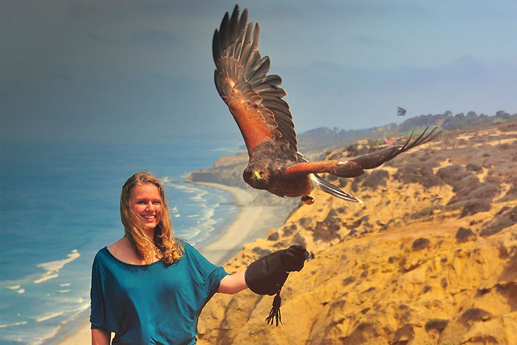 falconry lesson | san diego